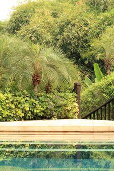 Free Pool In Jungle Stock Photo - 13669310