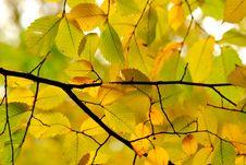 Free Golden Autumn Royalty Free Stock Image - 13669586