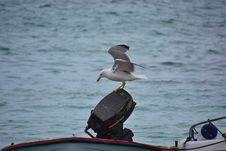 Free Bird, Water, Seabird, Sea Royalty Free Stock Image - 136624976