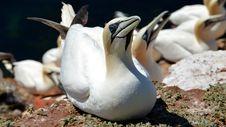 Free Fauna, Bird, Water Bird, Beak Royalty Free Stock Photos - 136625098