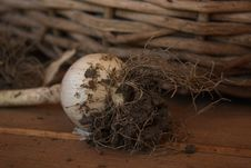 Free Bird Nest, Nest, Wood, Still Life Photography Stock Images - 136625174