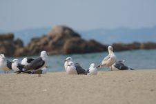 Free Seabird, Bird, Gull, Fauna Stock Photos - 136625663