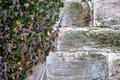 Free Ivy And Old Wall Stock Photo - 13676370