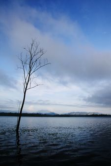 Free Lonely Tree In Blue Tone Royalty Free Stock Photo - 13670435