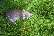 Free Little Kitten In A Grass Stock Images - 13671164