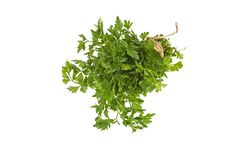 Free Organic Parsley Royalty Free Stock Images - 13671409