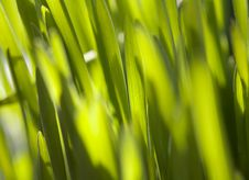 Free Fresh Green Grass Royalty Free Stock Image - 13671966