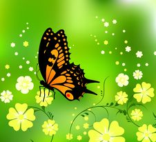 Free Butterfly Stock Photo - 13672530