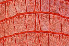 Free Red Patterned Leather Stock Photos - 13673143