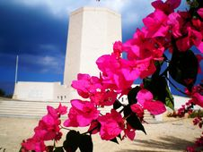 Bouganvillea Royalty Free Stock Photos
