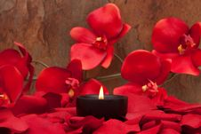 Free Candle And Rose Petals Royalty Free Stock Photography - 13673427