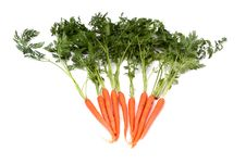 Free Fresh Organic Carrot Royalty Free Stock Images - 13673489