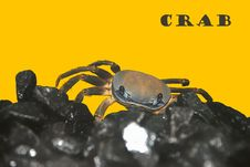 Free Crab Stock Photo - 13673570