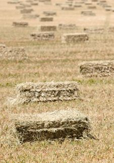 Free Haystacks Stock Photo - 13673630