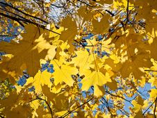 Free Yellow And Orange Autumn Foliage Stock Photo - 13674600