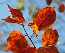 Free Yellow And Orange Autumn Foliage Royalty Free Stock Photography - 13674907