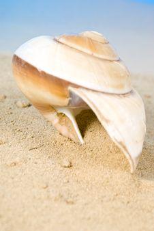 Free Seashell Royalty Free Stock Photos - 13675068