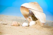 Free Seashell Stock Photography - 13675082
