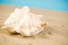 Free Seashell Stock Image - 13675281