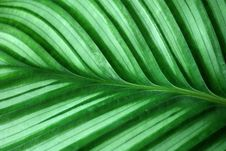 Free Stripes On A Green Leaf Stock Photo - 13675380