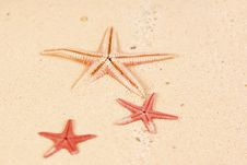 Free Starfish Royalty Free Stock Photography - 13675477