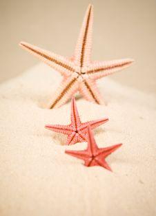 Free Starfish Stock Photo - 13675490