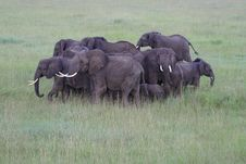 Elephants Photographed From The Air Royalty Free Stock Photos