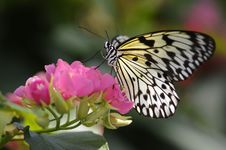 Free Butterfly On Flower Stock Images - 13676684