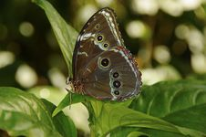 Free Butterfly On Flower Stock Image - 13676731