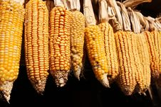 Corn Drying Outisde On Black Background Royalty Free Stock Photos