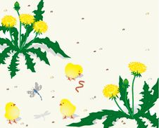 Free Chickens And Dandelions Stock Images - 13677144