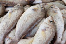Free Fish In Wet Market Royalty Free Stock Images - 13679569