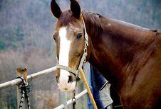 Free Horse Stock Image - 13679801