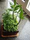 Free Potted Plant Stock Image - 13684841