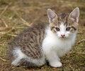 Free Kitten Royalty Free Stock Photography - 13684927