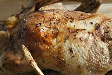 Free Roasted Duck Stock Photo - 13681550