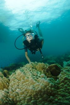 Young Female Scuba Diver Swims Over Reef Stock Image