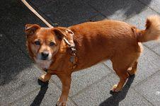 Free Dog Stock Photo - 13683450