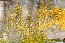 Free Grunge Background Stock Photo - 13684080