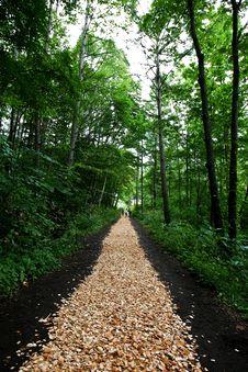 Free Path Through The Woods Stock Photos - 13685023