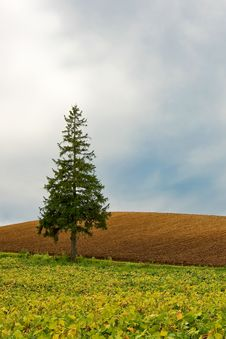 Triangular Tree Against Sky Royalty Free Stock Photos