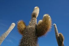 Cactus Against Blue Sky Royalty Free Stock Photo