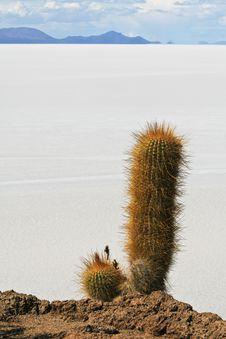 Salar De Uyuni In Bolivian Andes Royalty Free Stock Photo