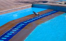 Free The Pigeon Drinks Water In A Pool Stock Photography - 13685202
