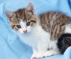 Free Kitten Royalty Free Stock Photography - 13685307