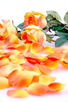Free Orange Roses Stock Photos - 13686123