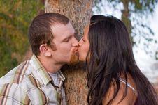 Free Kissing Tree Royalty Free Stock Photography - 13688057
