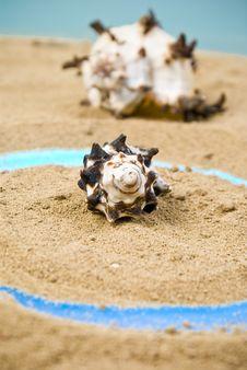 Free Seashell Stock Photo - 13688090