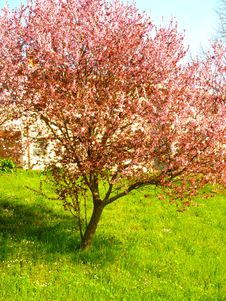 Free Spring Explosion Stock Photos - 13688943