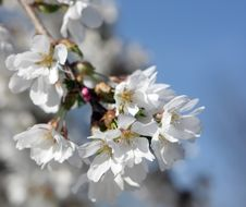 Free Spring Bloom Stock Photo - 13689010